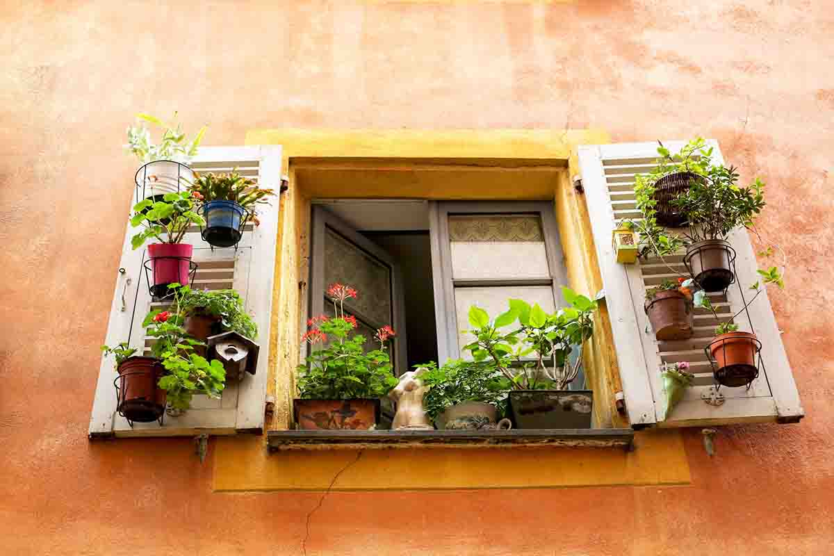 Orange building with open window surrounded by plants