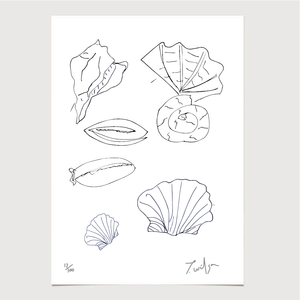 Art - James Wilson 'Sea Shells' Print