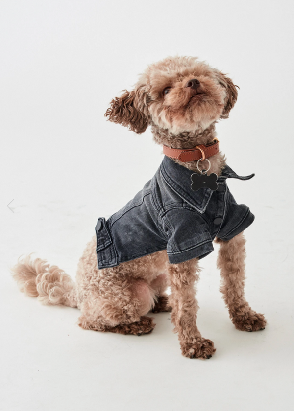 DL 1961 | Doggy Denim Jacket in Bad To The Bone