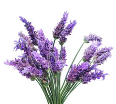 Bunch of sweet lavender flowers