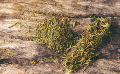 cannabis plants with the effect of nerolidol