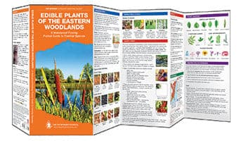 Pathfinder - Edible Plants of the Eastern Woodlands