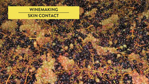 Skin contact in winemaking