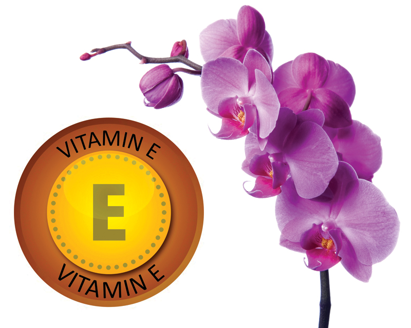 Vitamin E and Early-Purple Orchid Extract