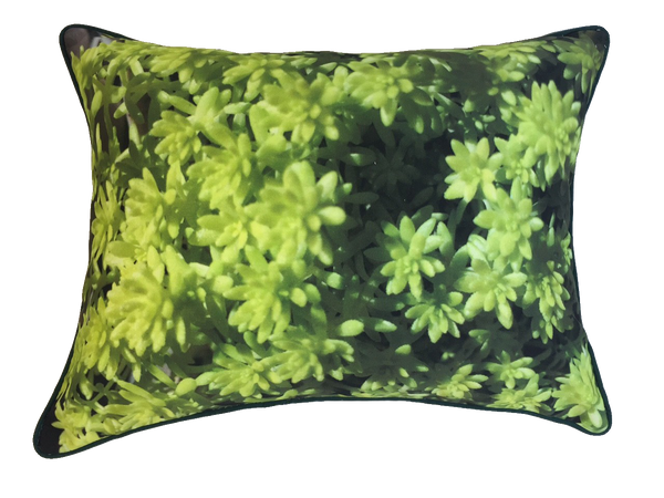 Pillow 468 - 25% OFF