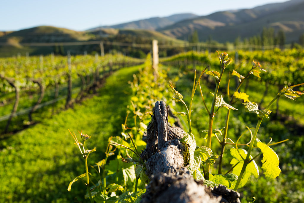 One News profiles our use of biochar and vermicast across our vineyards