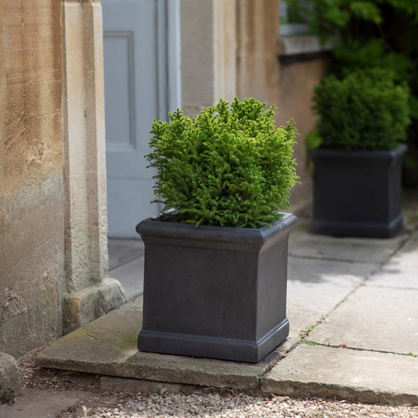 Box Grove Planter in 2 Sizes