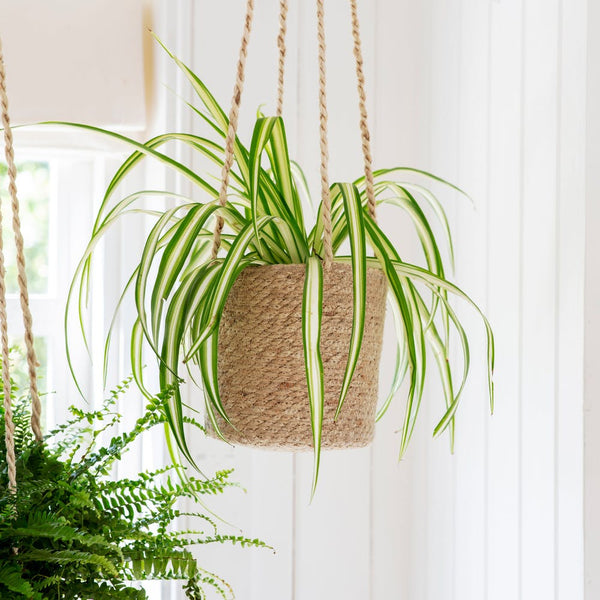 Hanging Jute Pot - tall