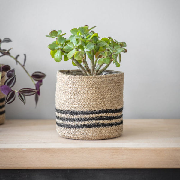 Striped Plant Pot