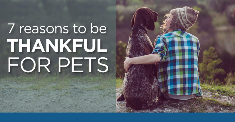 Seven Reasons to be thankful for Pets