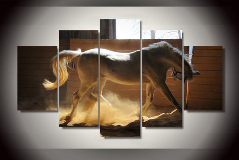 Elegant White Horse Canvas