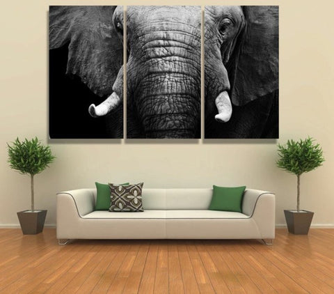 Elephant Lovers 3 Piece Canvas