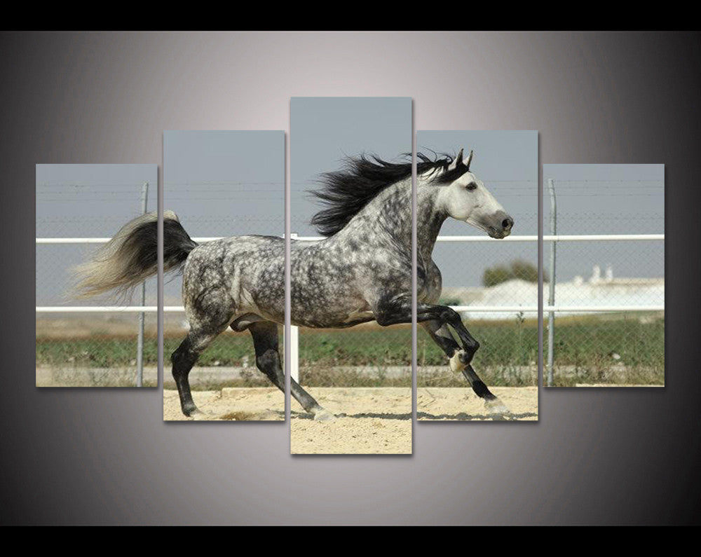 Limited Edition Delightful Dapple Horse 5 Piece Canvas