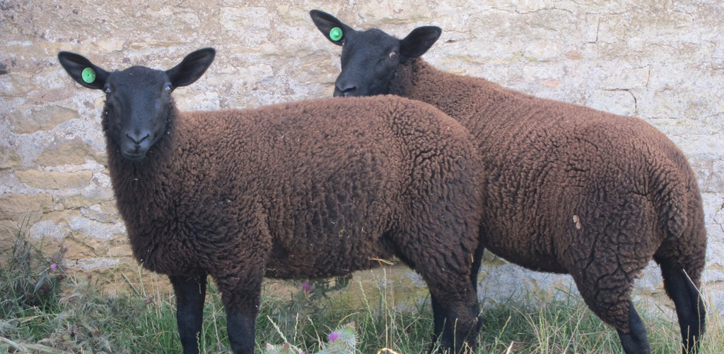 Black Sheep Yarns Gallery