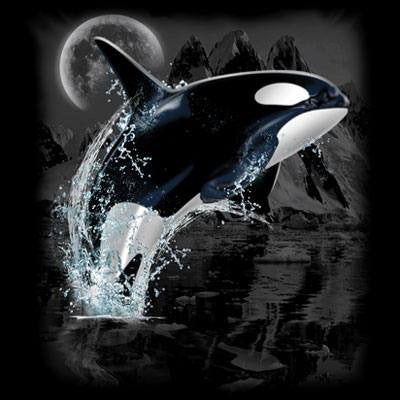 Killer Whale Wilderness  T Shirt