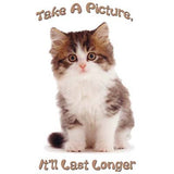 Take a Picture- Kitten T Shirt