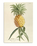 Poster Print PINEAPPLE