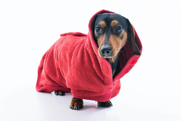 Ruff & Tumble Drying Coat for Short Legged Breeds - Distinctive Pets