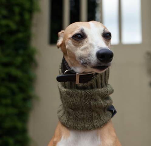 Snood - in New Olive