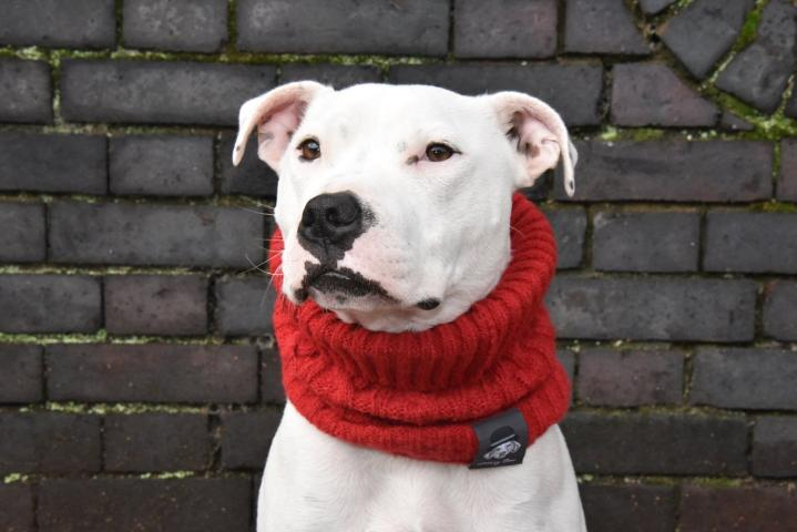 Wilbur_Ruby's Red snood by Ellery Bow_size large