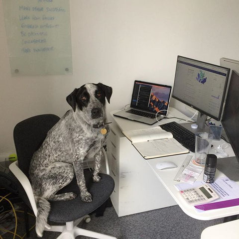 Wendy_dog_in_the_office