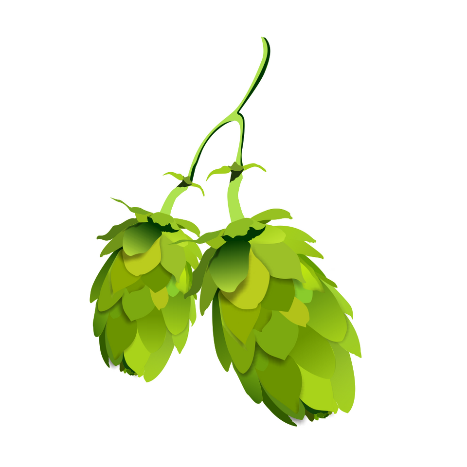 Hops – A Surprising Skin and Hair Care Herb