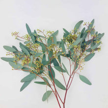 Load image into Gallery viewer, {pre-order} Eucalyptus