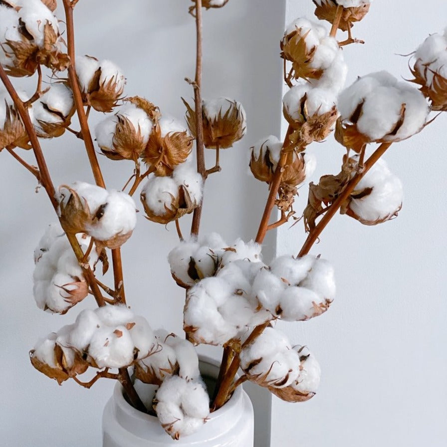 {pre-order} Dried, Natural Cotton Stems