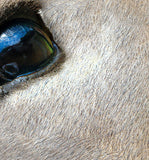 Deer eye texture close up