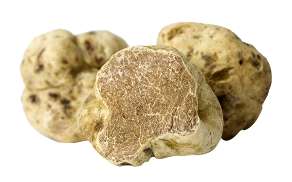 Fresh White Truffles