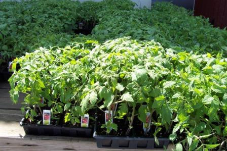 Specialty Items: Vegetable & Herb Plants
