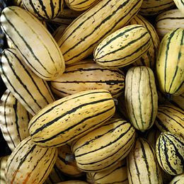 Vegetables: Fall Squash (Delicata) - LIMITED