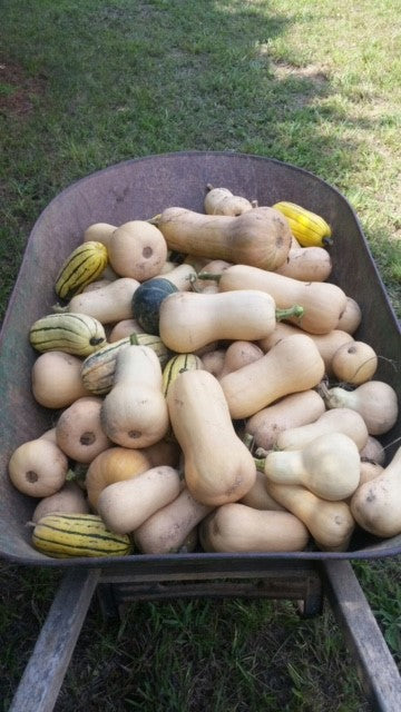 Vegetables: Fall Squash (Mix)