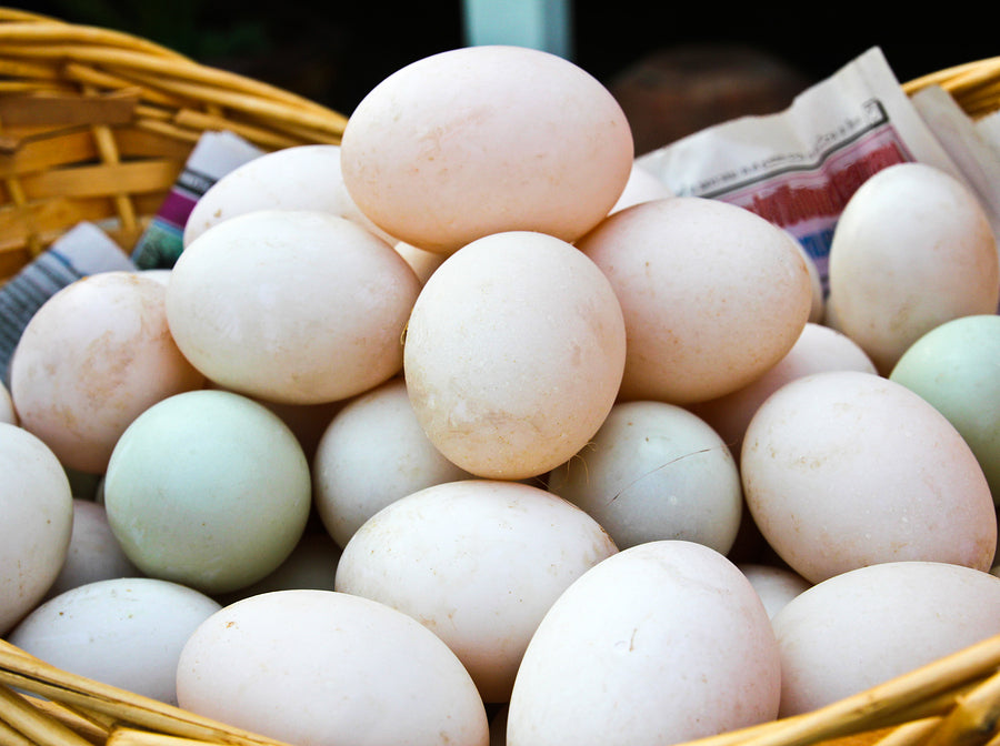 Eggs: Pasture Raised Duck Eggs - LIMITED