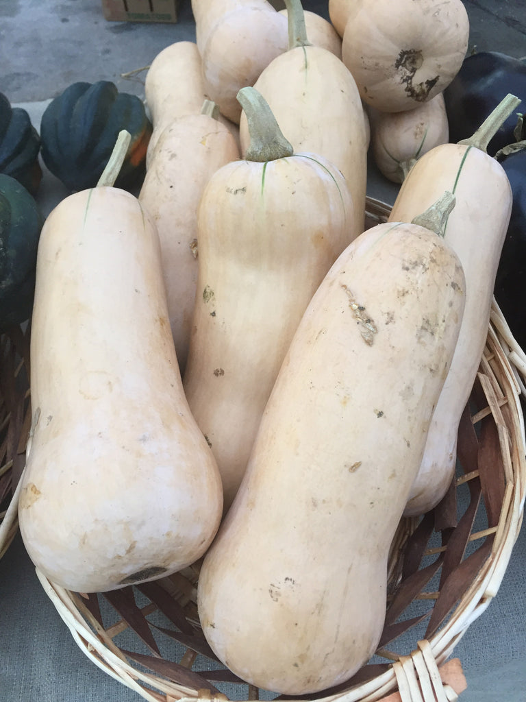 Vegetables: Fall Squash (Butternut) - LIMITED