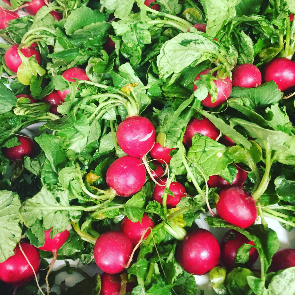 Vegetables: Radishes (Mix) - LIMITED