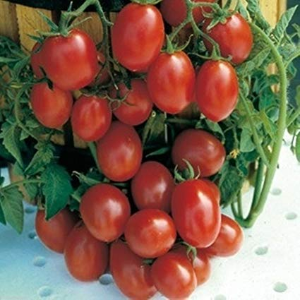Vegetables: Tomatoes (Italian Grape)