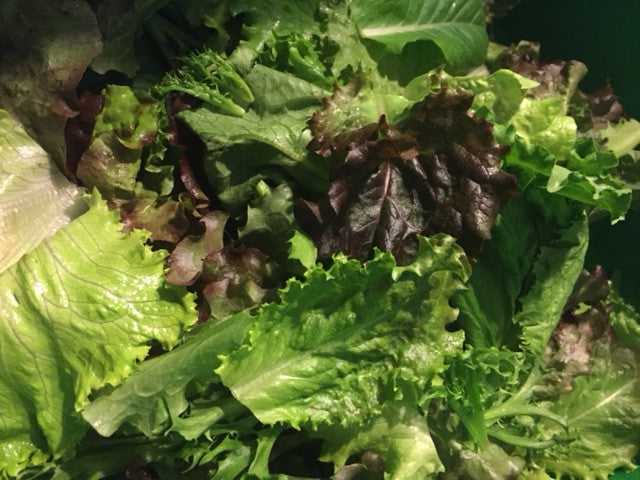 Vegetables: Lettuce (Mixed Leaf)