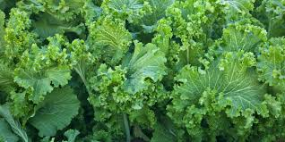 Vegetables: Mustard Greens