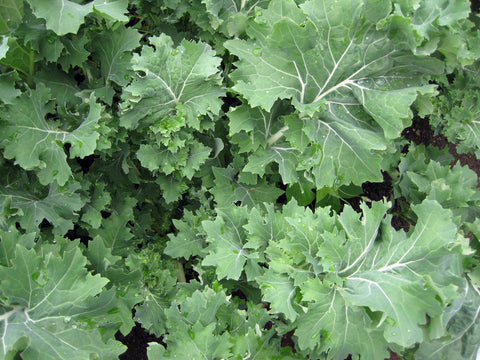 Vegetables: Kale (Curly)