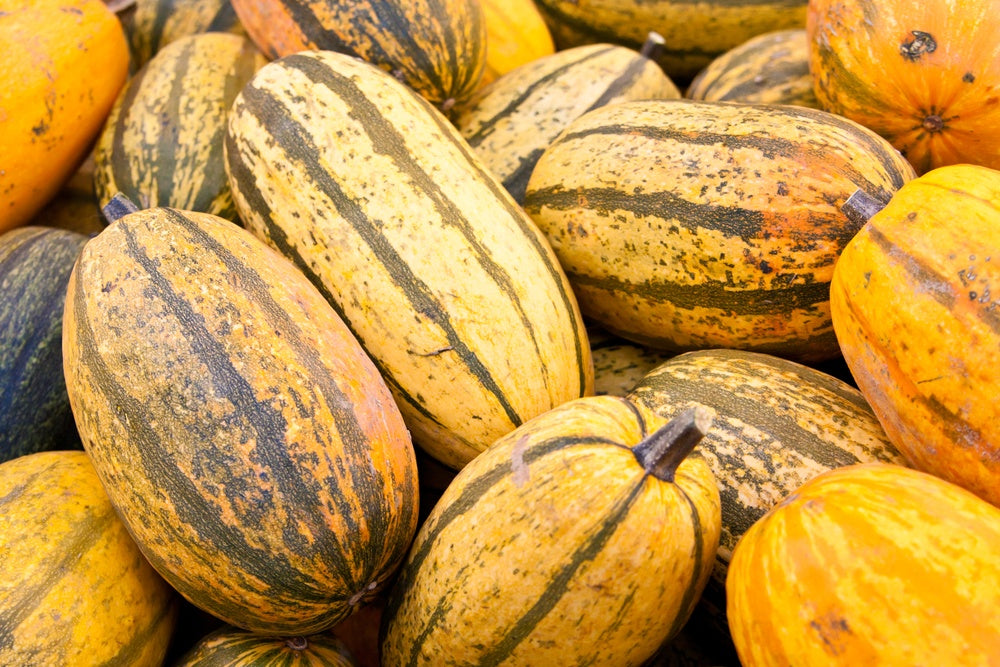 Vegetables: Fall Squash (Stripetti) - LIMITED