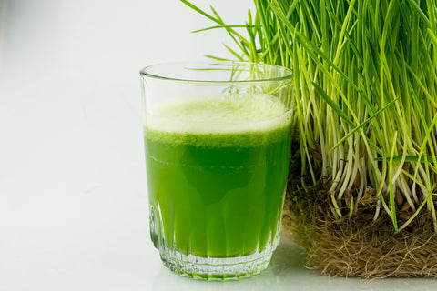 Shoots and Sprouts: Wheat grass (living plant)