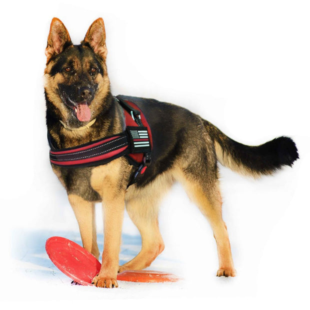 Thin Red Line Dog Harness | Multiple Sizes