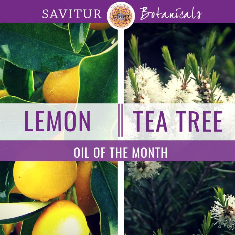 It's November and our Oils of the Month are Lemon & Tea Tree