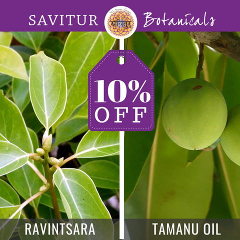 Oil of the Month - 10% off - Ravintsara & Tamanu Oil