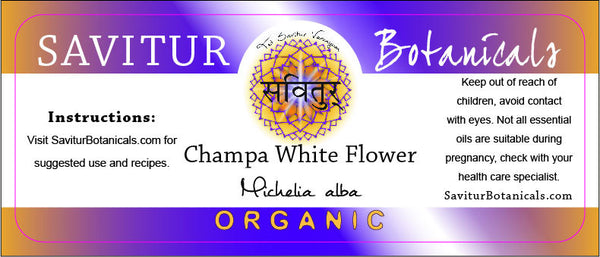 Champa, White Flower