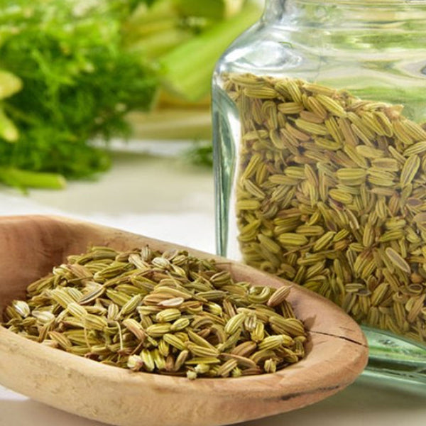 Fennel (India)
