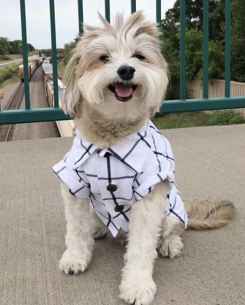 Modern Dog Clothing | Cute Dog Shirts and Outfits by Dog Threads