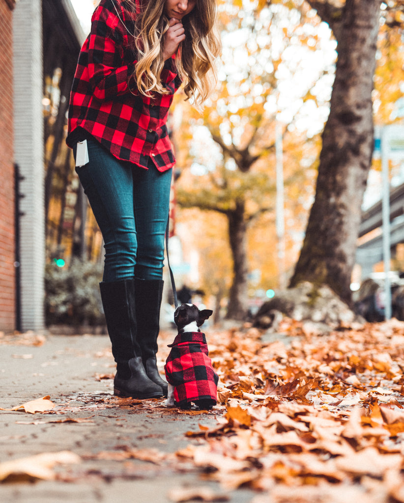 Matching Plaid Flannel Shirts for Families and Dogs