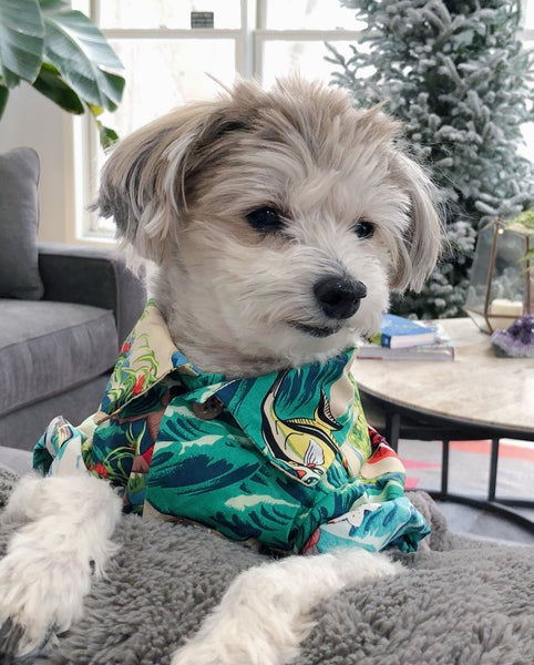Luau BBQ Shirt - Matching Sizes for Dogs + Humans